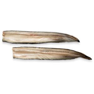 Chapadillo anguila