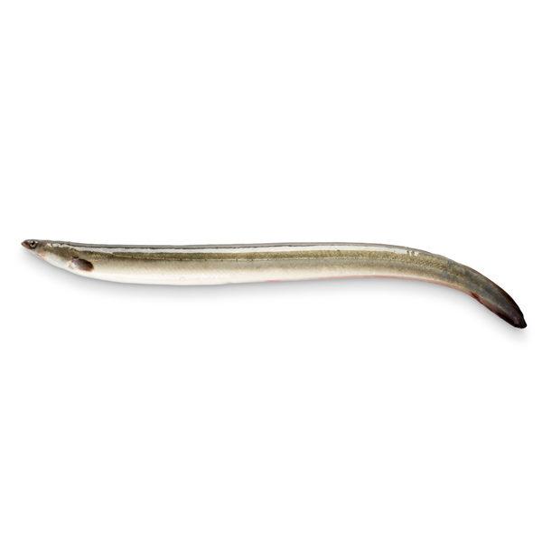 Anguilas Vivas