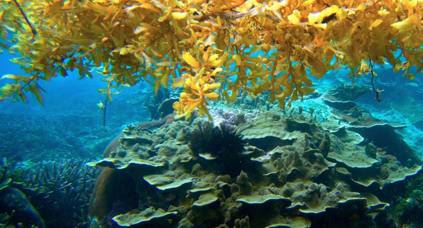 El Mar de los Sargazos, el onírico lugar donde las anguilas desovan